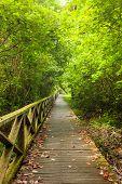 stock photo of rainforest  - Boardwalk in dense rainforest in niah cave malaysia borneo - JPG