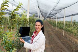 foto of orchard  - Young woman agronomist with laptop standing beside apple tree in modern orchard with anti hail net - JPG