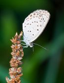 picture of feverfew  - The butterfly fall a plant  - JPG