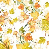 foto of grape-vine  - Floral background - JPG