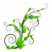 foto of scroll design  - Floral design element - JPG