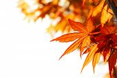 foto of fall trees  - Beautiful autumn maple leaves background - JPG