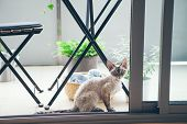 Happy Devon Rex Kitten Is Walking On The Balcony Decorated With Green Plants. Cat Sitting On Terrace poster
