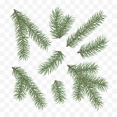 Green Fir Branches. Holiday Decor Element. Set Of A Christmas Tree Branches. Conifer Branch Symbol O poster