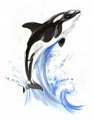 Jumping Killer Whale. Ink And Watercolor Illustration poster