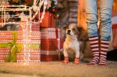 Merry Christmas. Family child legs and dog in striped red and white socks under the Christmas tree i poster