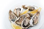 Fresh oysters. Raw fresh oysters on white round plate, image isolated, with soft focus. Restaurant d poster