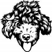 Animal Dog Poodle 7A.eps poster