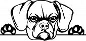 Animal Dog Puggle Rg6H Peeking.eps poster