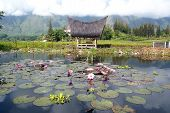 pic of minangkabau  - House and pond with lotuses Samosir Sumatra - JPG