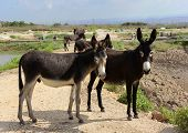 pic of burro  - small herd of burros freely living in the nature - JPG