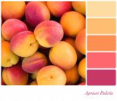Apricot background colour palette with complimentary swatches.