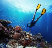 stock photo of fish skin  - Freediver gliding underwater over vivid coral reef - JPG