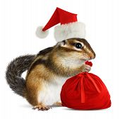 stock photo of chipmunks  - Chipmunk in red Santa Claus hat and bag with gifts on white background - JPG