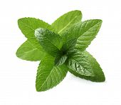 stock photo of mints  - Fresh mint leaves - JPG