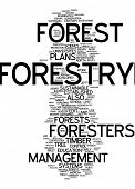 Word cloud - forestry