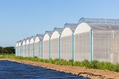 picture of greenhouse  - view for greenhouse with blue sky and field agriculture - JPG