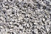 stock photo of oyster shell  - Oyster shell to prepare for breeding new oyster at sea - JPG