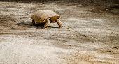 foto of tortoise  - Tortoise outdoors - JPG
