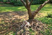 stock photo of stray dog  - Thai stray dog relaxing under big tree on the root and grass yard - JPG