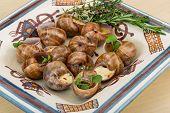 foto of escargot  - Escargot with rosemary thyme garlik and melissa - JPG