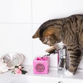 stock photo of wash-basin  - cat playing with a candle on the wash basin - JPG