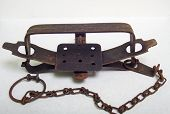 stock photo of beaver  - A vintage beaver leghold trap used in the fur trade - JPG