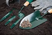 picture of household farm  - gardening tools with seed on black soil - JPG