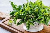 stock photo of italian parsley  - Italian Parsley - JPG