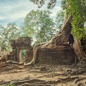 image of raider  - Ta Prohm famouse giant tree with ancient roots - JPG