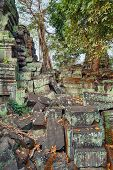 picture of raider  - Ta Prohm famouse giant trees with ancient roots - JPG