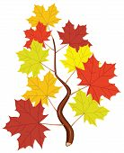 stock photo of maple tree  - vector branch with fall maple leaves on white background - JPG