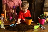 Growth Concept. Little Boy Plant Flower In Soil To Grow, Growth. Growth And Development. Growth Seas poster
