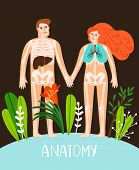People Anatomy Poster. Human Body Systems Image, Male And Female Anatomy Organs And Skeleton Vector  poster