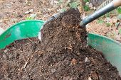 picture of wheelbarrow  - Shovel Shovel Pours Fertile Compost into Wheelbarrow - JPG