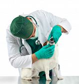 pic of dog teeth  - Veterinarian examines the dog