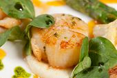 stock photo of scallops  - Baked scallops with asparagus - JPG