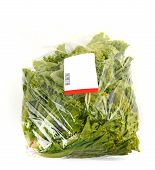 foto of iceberg lettuce  - iceberg lettuce in plastic bag package with price tag - JPG