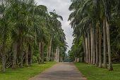 stock photo of royal botanic gardens  - botanical Garden of Peradeniya Kandy - JPG