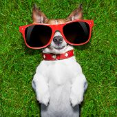 picture of comedy  - super funny face dog lying on back on green grass looking crazy - JPG