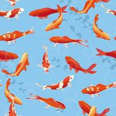 picture of koi fish  - Red koi fishes in the pond 