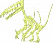 picture of pterodactyl  - illustration of Pteronodon skeleton isolated on white - JPG