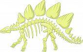 picture of skeleton  - illustration of Stegosaurus skeleton isolated on white - JPG