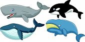 foto of orca  - illustration of Cartoon whale collection isolated on white - JPG
