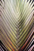 stock photo of palm  - Photo surface of palm leaf background palm leaf - JPG