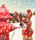 foto of licking  - a chihuahua dressed up for christmas as a reindeer licking a frozen pole with his tongue toned with a soft instagram like filter effect - JPG