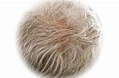 stock photo of grey-haired  - Gray hair thinning on senior man scalp - JPG