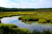 stock photo of wetland  - Wetlands landscape in Algonquin provincial park - JPG