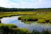 image of wetland  - Wetlands landscape in Algonquin provincial park - JPG