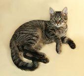 stock photo of yellow tabby  - Tabby kitten with yellow eyes lying on yellow background - JPG